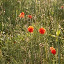 Blumenwiese statt Neubaugebiet